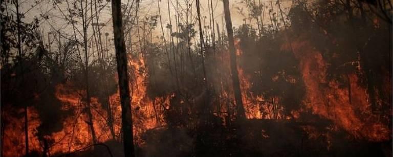 Amazônia sob Bolsonaro