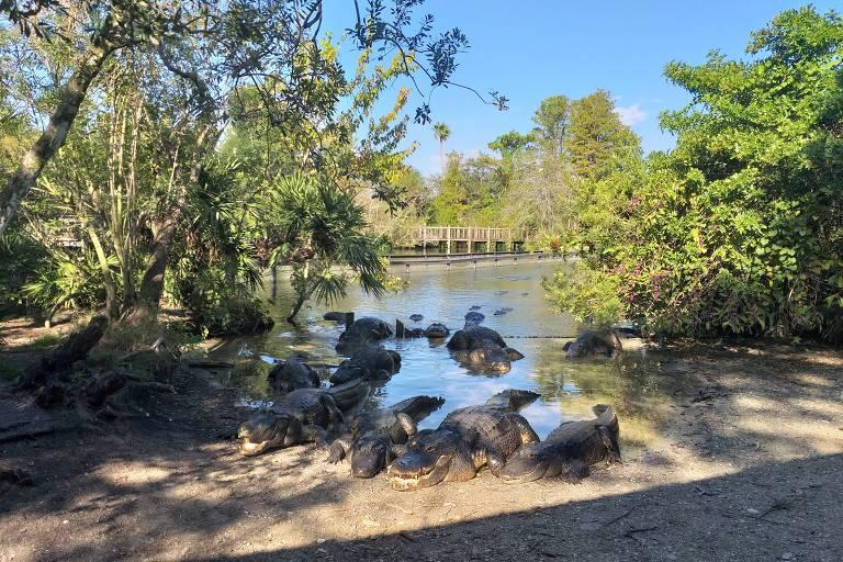 Gatorland, atração em Orlando que ajuda na preservação de jacarés