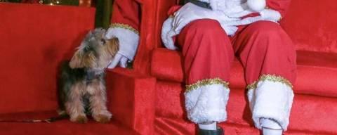Quer foto do pet com o Papai Noel? Veja locais em SP