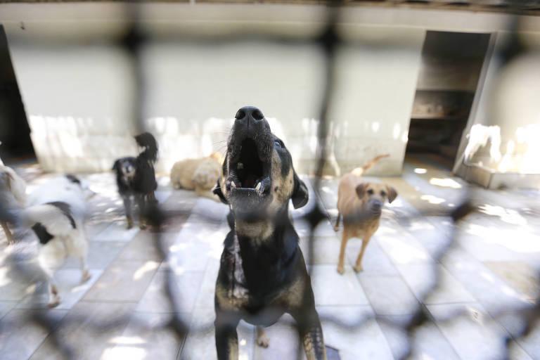 Uipa, ONG que cuida de  animais abandonados