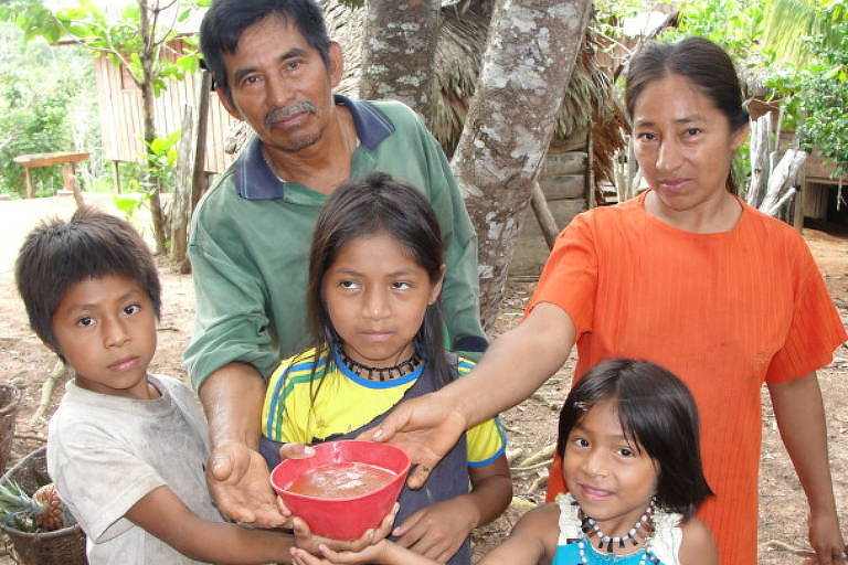 Meliponicultura, a cultura dos produtos da abelha sem ferrão da Amazônia, no Alto do Solimões