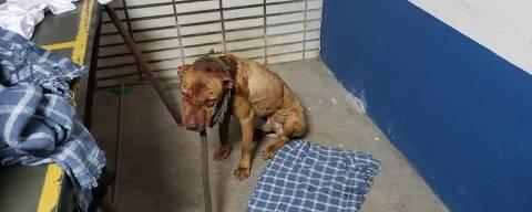 Cão ferido é encontrado em rinha na cidade de Mairiporã. Entre os 37 presos há um policial militar e um médico veterinário