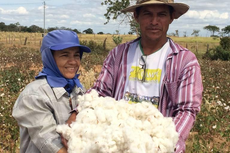 Produtores familiares de algodão sustentável em Catuti (MG)