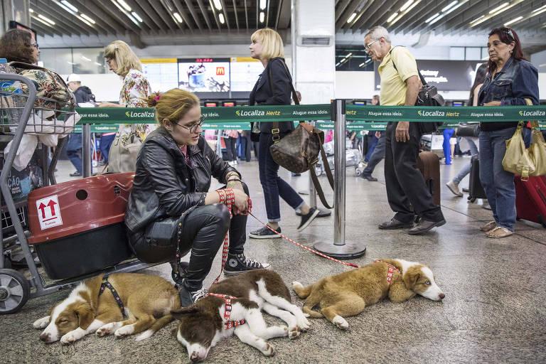 Movimento de passageiros no Aeroporto Internacional de São Paulo, em Cumbica, Guarulhos. Passageira Marcelle Alonso Melo,19, aguarda com seus cães  no terminal 2 de Cumbica