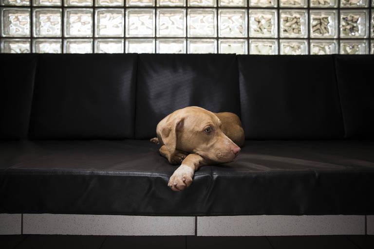 Cães resgatados de rinha ganham nova rotina de carinho e cuidados