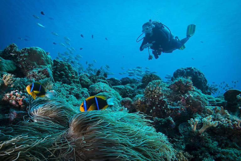 Pesquisas apontam que substâncias presentes em muitos protetores solares alteram o DNA dos corais, matam as espécies mais jovens e são tóxicas para peixes, camarões e moluscos