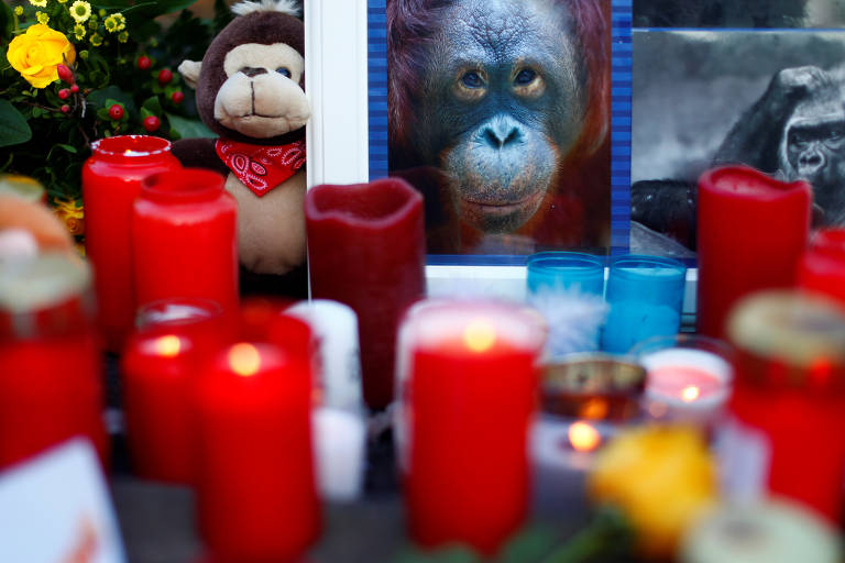Incêndio mata mais de 30 macacos na Alemanha; veja fotos de hoje