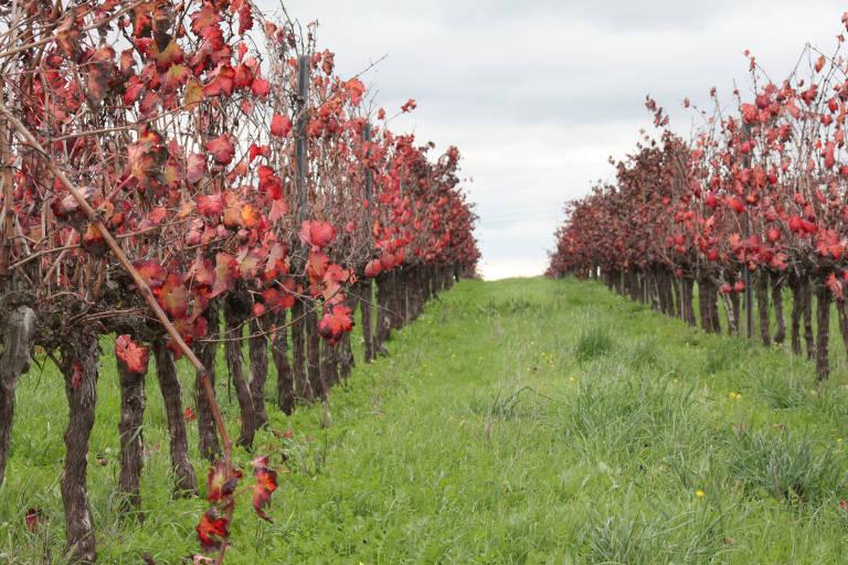 Portugal quer desbancar Chile em venda de vinho ao Brasil