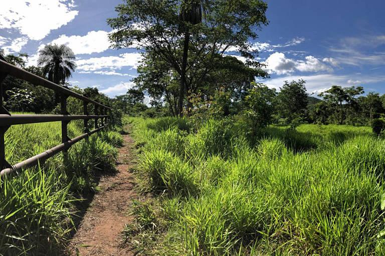 Criação de santuário de elefantes regenera fazenda no cerrado em MT