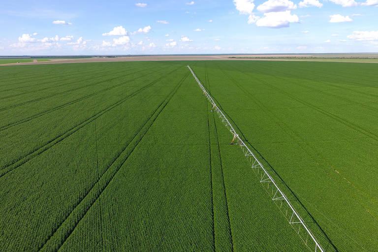 Na foto, uma vasta plantação de soja aparece ocupando grande 3/4 da foto, com cores verdes vivas. Em cima, um céu azul claro com algumas nuvens