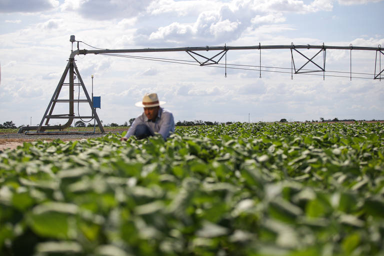 Agricultura irrigada gera disputa por água na Bahia