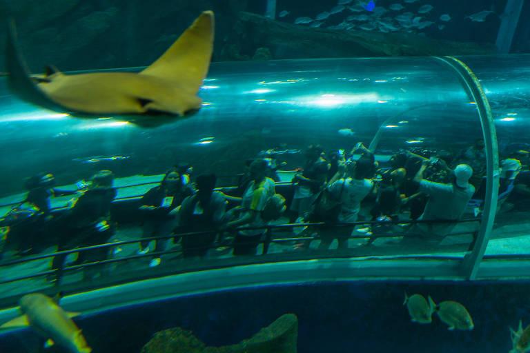 Localizado na região do Porto Maravilha o AquaRio, maior Aquário da América do Sul, se consolida como um dos pontos mais visitados do Rio de Janeiro