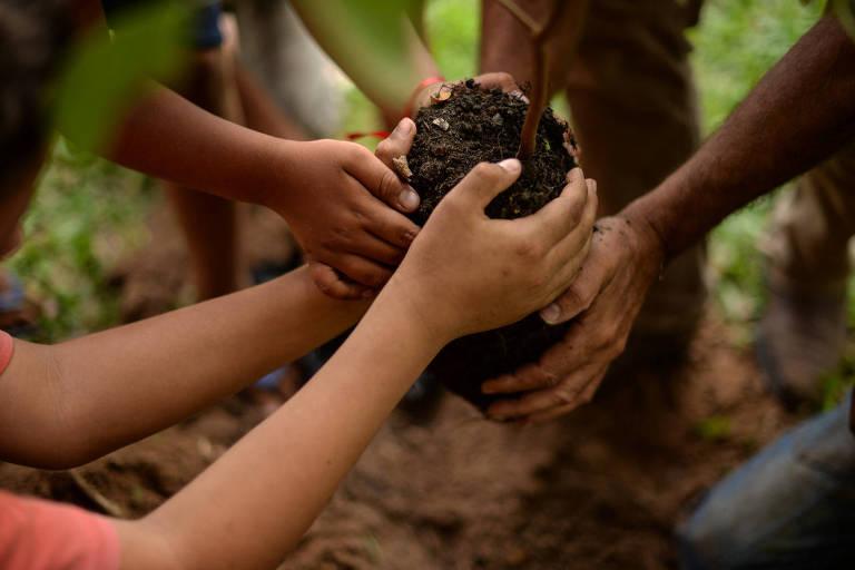 MST planeja plantar 100 milhões de árvores pelo Brasil em dez anos