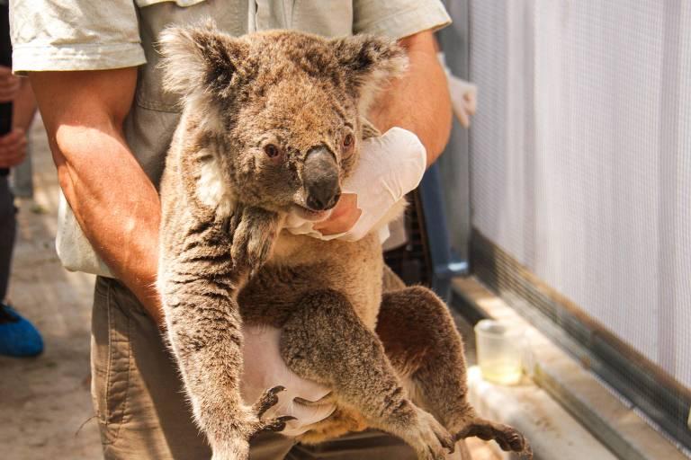 Incêndio florestal atinge reserva natural onde vivem coalas