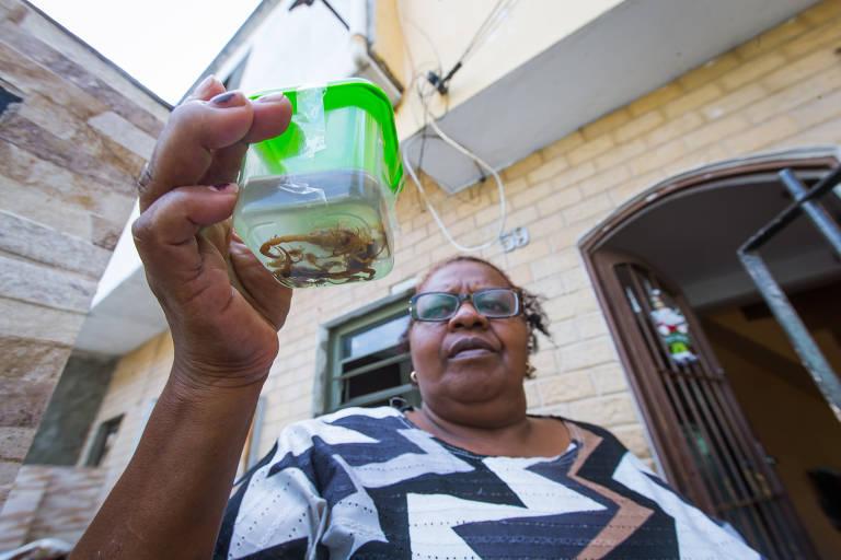 Escorpiões assustam moradores na zona norte de SP