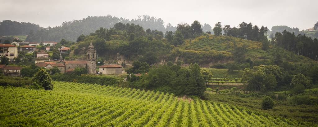 Fileiras de vinhas verdes, com construções antigas ao fundo