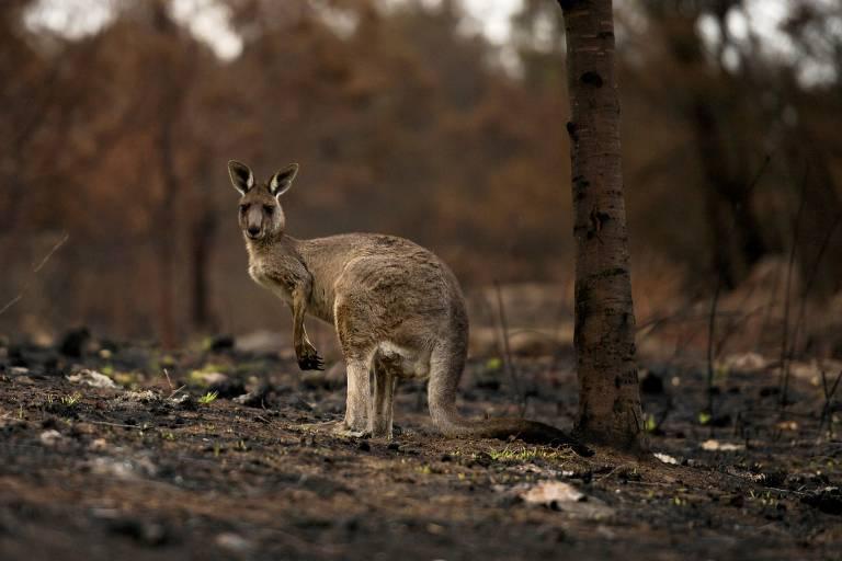Bichos australianos que vivem em SP
