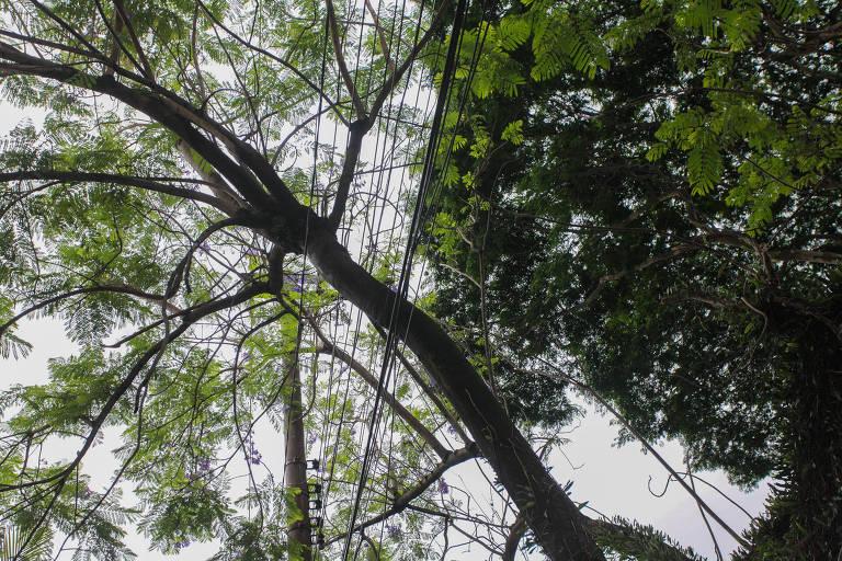 Moradores do condomínio aguardam providências da Enel com relação aos galhos  caídos em cima da rede elétrica
