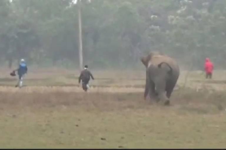 Reprodução de vídeo em que elefante persegue homens na Índia