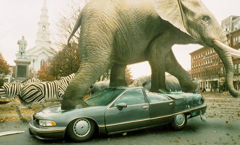 elefante pisa num carro