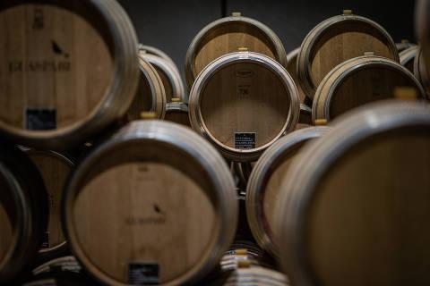ESPÍRITO SANTO DO PINHAL, SP, 11.12.2019 - Barris na vinícola Guaspari, que passou a produzir uvas em 2006 na fazenda na cidade de Espírito Santo do Pinhal, no estado de São Paulo. A produção de vinho de alta qualidade no interior de São Paulo cresceu. (Foto: Eduardo Anizelli/Folhapress)