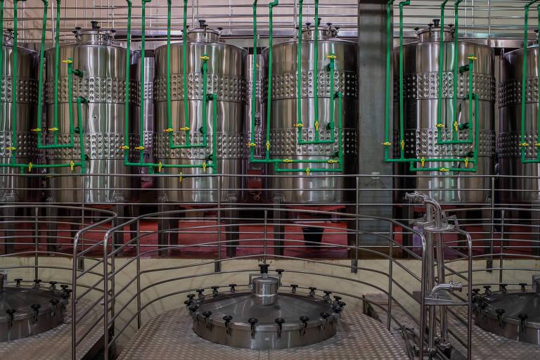 Colheita de inverno melhora qualidade da uva e eleva sofisticação dos vinhos