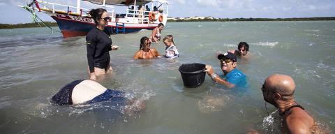 NATAL,RN, BRASIL, 21,12,2019, Em Tibau do sul a 77km de Natal, águas mansas, uma lagoa que deságua no mar, falésia escarpadas com vegetação ainda nativa, um dos passeios mais concorridos é o  passeio de barco gastronômico pela lagoa Guaraíras, são vários pontos de paradas regado com deliciosos sucos e um cardápio recheados de mariscos e peixes e camarões da própria região. Parada para pescar mariscos. (Foto: Alex Régis/Folhapress, COTIDIANO).