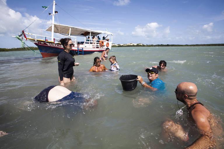Dentro da lagoa, um homem segura um cesto usado para colocar os mariscos, enquanto turistas em volta dele observam. Ao lado, se vê apenas as costas de um outro homem, que mergulha para pescar. Ao fundo, o barco da excursão.