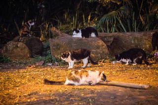 Grupo de gatos no parque da Aclimação, em São Paulo