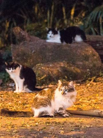 SÃO PAULO, SP, 11.08.2019 - Grupo de gatos no parque da Aclimação, em São Paulo. O parque da Aclimação, na zona sul de São Paulo, virou a morada de uma centena de gatos abandonados. A proliferação dos bichanos gera polêmica e divide a opinião entre os que apoiam e os que querem que eles sejam retirados do local. (Foto: Lucas Seixas/UOL/Folhapress)