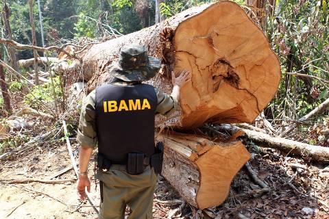 Ibama combate desmatamento ilegal na região de Castelo dos Sonhos, em Altamira (PA) em 24.ago.2016