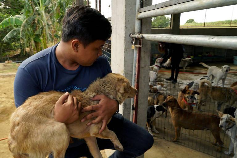 Cinzas do vulcão Taal afetam animais nas Filipinas; veja