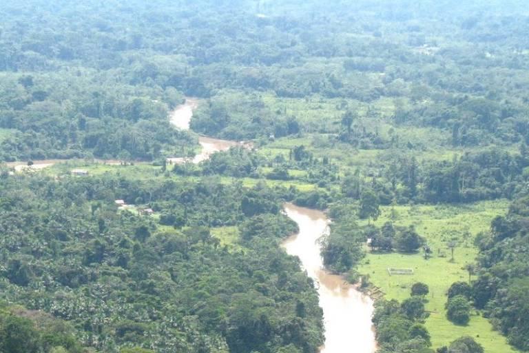 Área de mata com rio