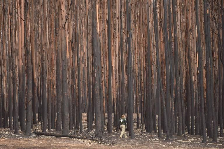Especialista da ONG Humane Society International procura por animais sobreviventes na Ilha Canguru, na Austrália, após os incêndios que devastaram a costa leste do país