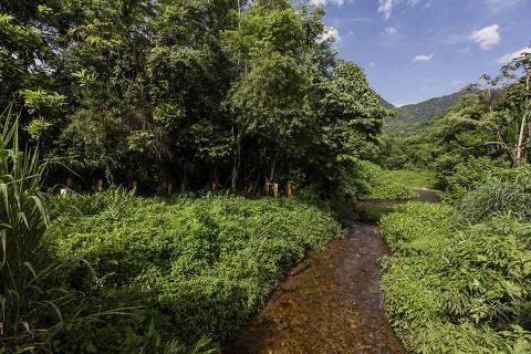 Justiça suspende revogação de normas de proteção a mangues e restingas