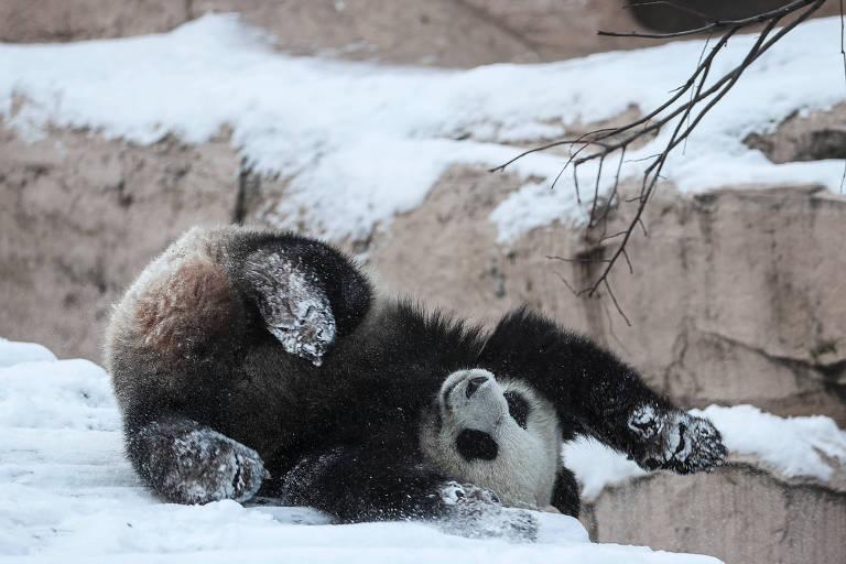 Dos pandas ao lobo guerreiro, PC Chinês tenta expandir sua influência com 'soft power'