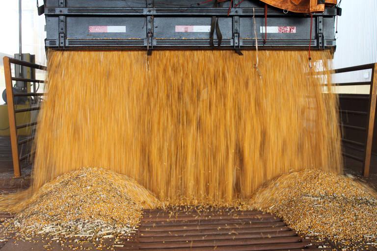 Lavoura de milho no norte do Paraná; milho está entre os produtos mais exportados pelo Brasil