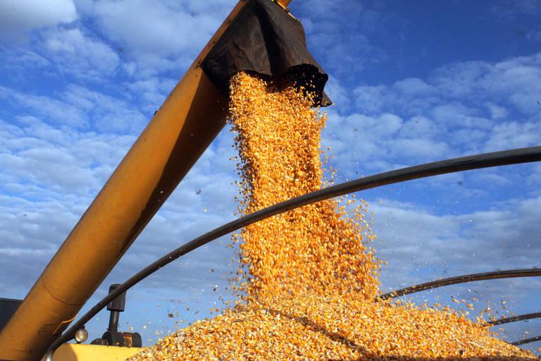 Milho sai de colheitadeira para carroceria de caminhão em lavoura no norte do Paraná; milho está entre os produtos mais exportados pelo Brasil