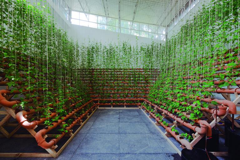 plantas nascem de canos