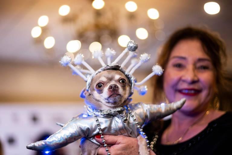 Cães participam de desfile de moda em Nova York