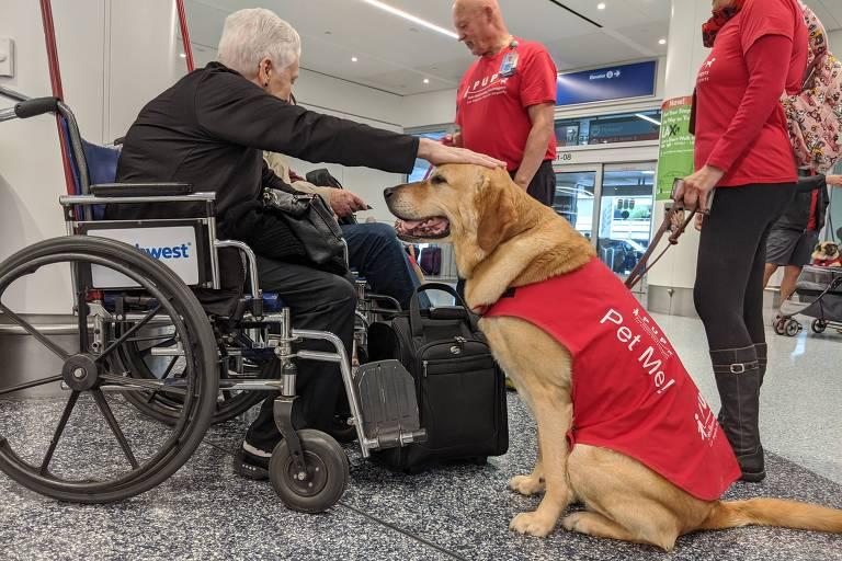 Passageira acaricia cachorro terapeuta no aeroporto internacional de Los Angeles