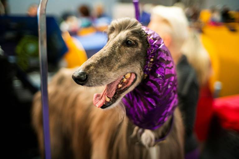144º Westminster Kennel Club Dog Show