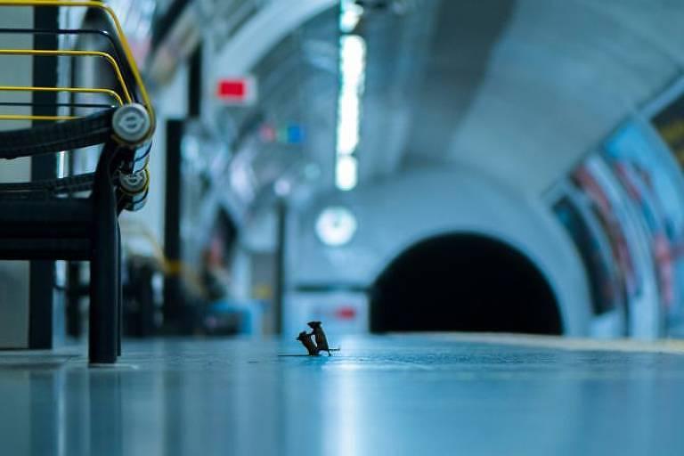 Sam Rowley passou cinco noites na plataforma do metrô fotografando camundongos