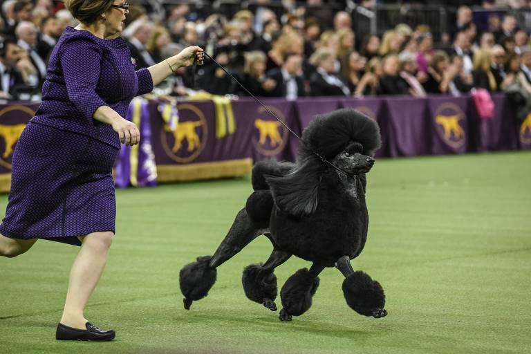 144º Westiminster Dog Show
