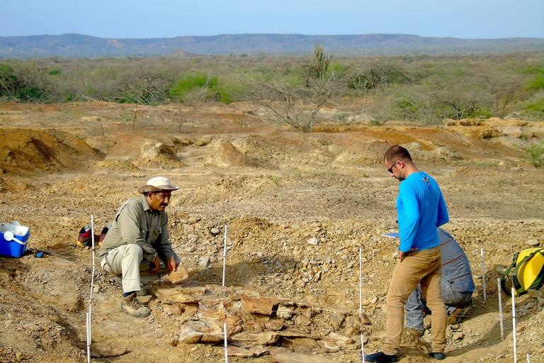 Paleontólogos colombianos e venezuelanos trabalhando juntos durante a escavação de tartarugas gigantes no norte da Venezuela