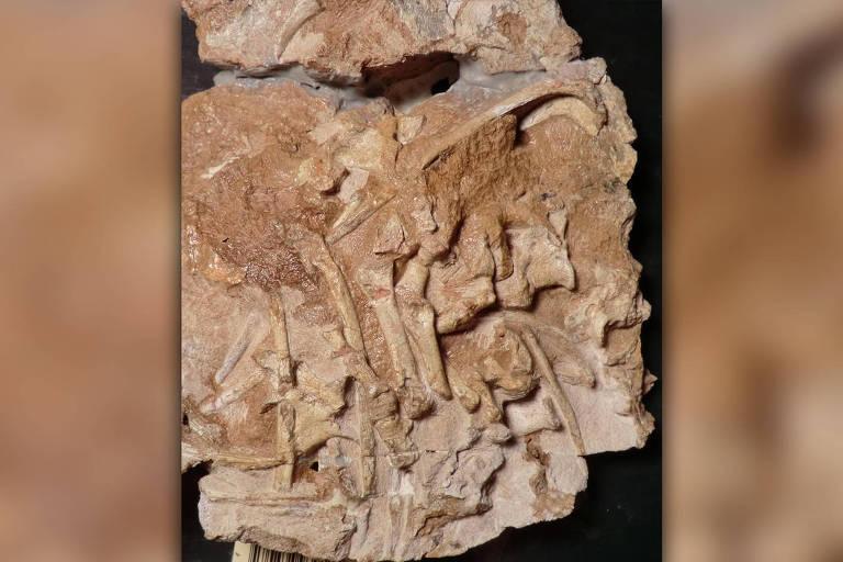 Fósseis do arquossauro, que viveu há 250 milhões de anos na Antártida, quando a região era de floresta