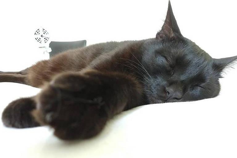 O gato preto Nescau está dormindo