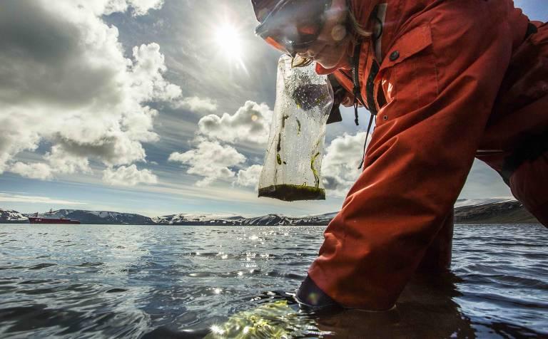 Um projeto que reúne 25 grupos de pesquisas do Brasil registrou cinco patentes resultantes da bioprospecção de moléculas extraídas de macroalgas marinhas da Antártida; o  projeto foi coordenado pelo químico Pio Colepicolo, do Instituto de Química da USP (Universidade de São Paulo)