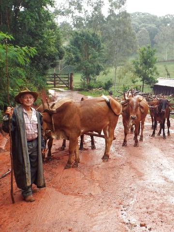Aos 83, Chicuta mantém tradição de carros de boi em Minas Gerais