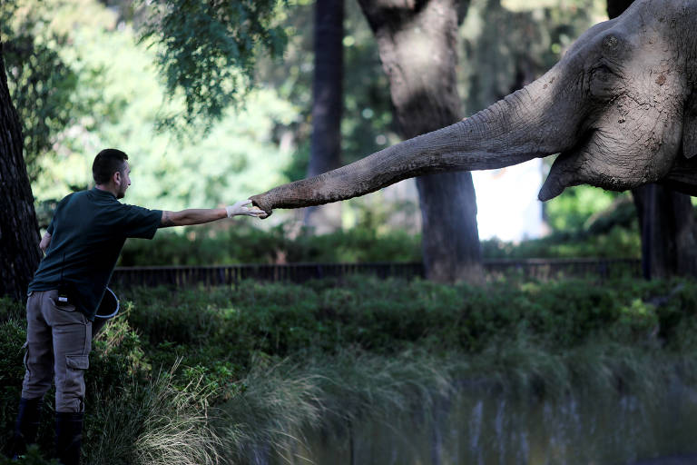 Homem, com braço erguido, oferece o alimento ao elefante, que pega com a tromba
